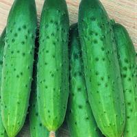 Семена огурцов Апрельский