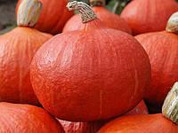 Семена тыквы Оранж Саммер F1 / Orange Summer F1 500 семян Enza Zaden
