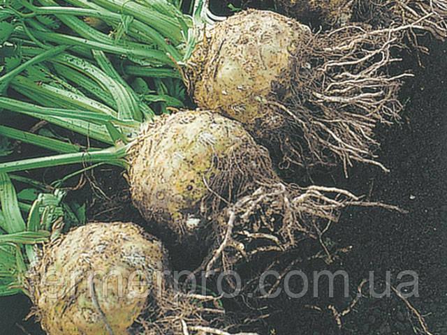 Семена сельдерея Голиаф 500 семян Enza Zaden