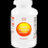 Лецитин - препарат для улучшения интеллекта, иммунитета, лечения печени и профилактики желчного пузыря
