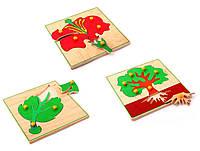 Игрушка - Детская Мозаика - Биология