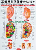 Плакат уха