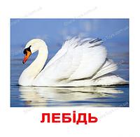 """Карточки большие украинские с фактами """"Птицы"""""""