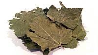 Смородина черная листья 100 грамм