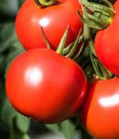 Семена томата Дебют F1 (1000 с) низкорослый ранний, фото 1