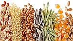 На мировом рынке снижаются цены на масличные культуры