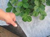 Агроволокно Premium-Agro 50 г/м² черно-белое (1,6*100 м) , фото 1