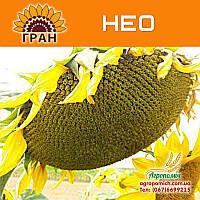 Семена подсолнечника НЕО (108 – 110 дн., гранстар)