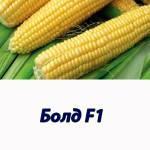 Кукуруза БОЛД F1 сладкий гибрид Syngenta