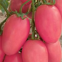 Сливка розовая