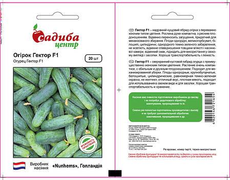 Семена огурца Гектор F1 (Nunhems / САДЫБА ЦЕНТР) 20 семян - пчелоопыляемый, ультра-ранний гибрид (40-44 дня), фото 2