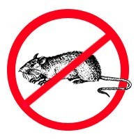 Дератизация-Уничтожение грызунов, крыс и мышей.