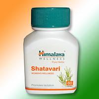 Шатавари - аюрведический препарат для женщин