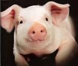 Гроуер-Фініш 15-10%  БМВД для свиней тм Kormil