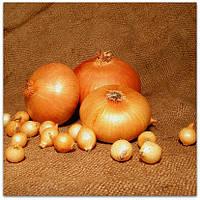 Семена лука Штутгарт весовые в Украине
