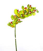 Орхидея Фаленопсис латекс