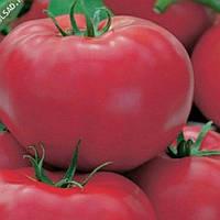 Семена томата Пинк Джаз F1 500 шт Hazera / Хазера, фото 1
