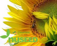 Семена подсолнечника Н4ЛM409 (N4LM409) от Нусид® (Nuseed)