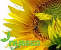 Семена подсолнечника ПСФ4639 (PSF-4639) от Нусид® (Nuseed)