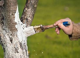 Побелка для садовых деревьев и кустов