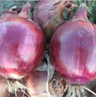 Семена лука Ред Булл F1 250000 семян красная