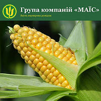 Семена кукурузы Ферум от МАИС (Черкасы)