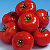 Семена томата Белле F1 500 семян Enza Zaden