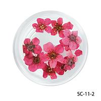 Сухоцветы малинового цвета в баночках. SC-11-2