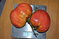 Семена Томат Фиделио  15 с., без картинки, от коллекционера