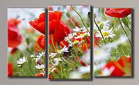 Картины модульные Маки среди ромашек 2