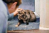 """Кошка """"черепашка"""" Ичиго (1,5 лет) ищет дом и заботливых хозяев"""