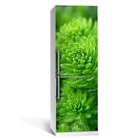 Наклейка виниловая на холодильник Хвойный лес (декор холодильника, природа, пленка самоклейка)