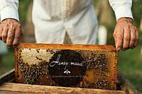Honey Mood - створює медовий настрій