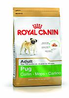 Royal Canin Pug Adult - корм для собак породы мопс с 10 месяцев 3 кг, фото 1