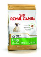 Royal Canin Pug Junior - корм для щенков породы мопс до 10 месяцев 1,5 кг