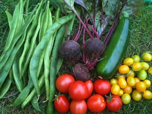 Насіння овочів профпакет