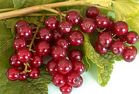 Смородина красная Виксне (Viksne) (саженцы), фото 1
