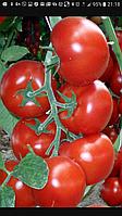 Семена томат Зульфия 100с RIJK ZWAAN / Рийк Цваан