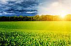 Зачем нужны антистрессанты растений?