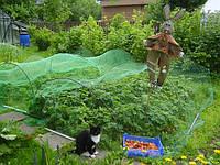 Сетка от птиц (5м*5м) защитная на деревья, кустарники, виноградники