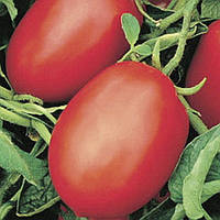 Семена томата Рио Фуего (Rio fuego) /Lark seeds,500г- очень плотный, сливовидной формы