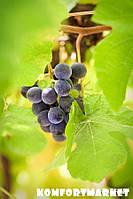 """Фотообои: """"Осенний виноград 2"""""""