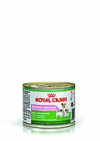 Royal Canin Starter Mousse - ніжний мус для цуценят до 2 місяців, вагітних і годуючих сук 0,195 кг