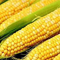 "Кукуруза ""Тести Свит"", фото 1"