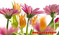 """Фотообои: """"Весенние цветы"""""""