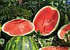 Семена арбуза Керрол F1 1000 сем.  Рийк Цваан.