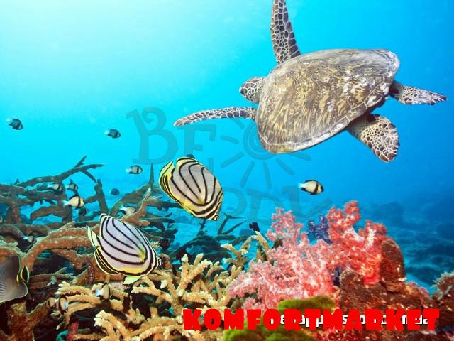 """Фотообои: """"Подводный мир"""""""