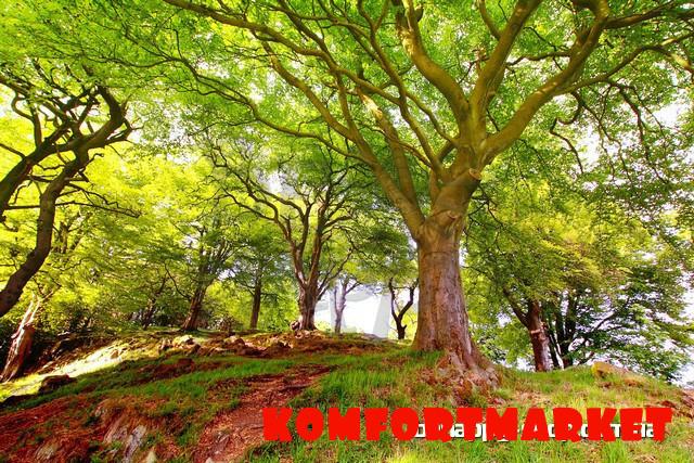 """Фотообои: """"Волшебный лес"""""""
