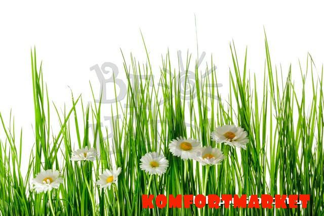 """Фотообои: """"Ромашки в траве"""""""