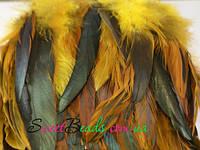Перья петуха, желтый